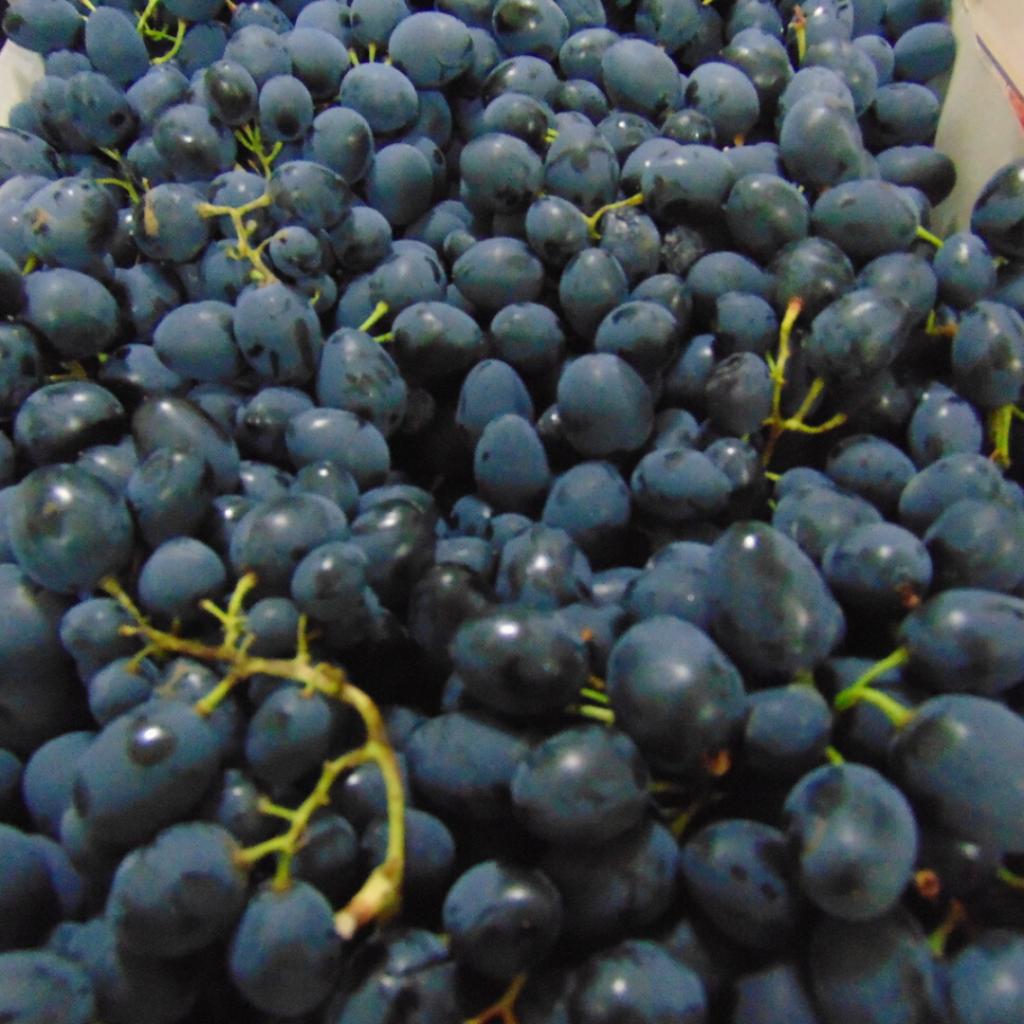 grozdje piljara